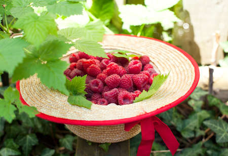 organic raspberry: Fresh organic raspberry in straw hat Stock Photo