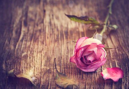 vintage wood: Dry Pink Rose on Wooden Background