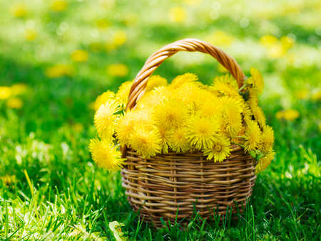 Dandelions in the basket
