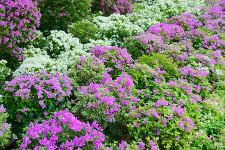 flower beds: beautiful flower beds in the park Stock Photo