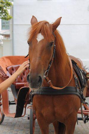 stroking: horse stroking hands