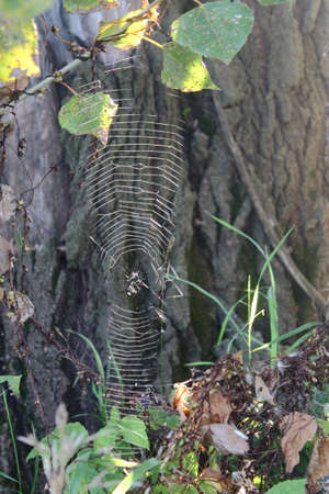 morning dew: cobweb in forest Stock Photo