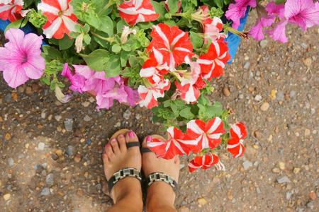 Female legs in slap on the background of flowers of petunias