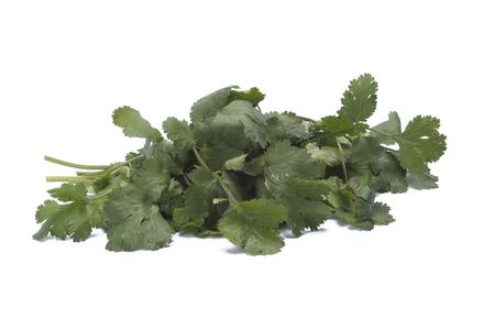 cilantro: El cilantro aislado en fondo blanco Foto de archivo