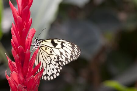 paper kites: paper kite butterfly on flower