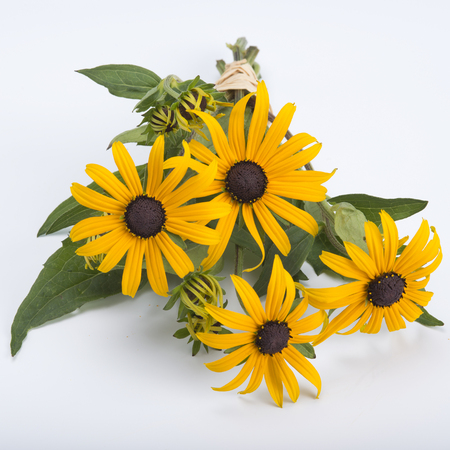 bright eyed: Rudbeckia bouquet isolated on white background