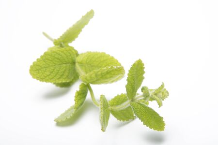 spearmint: Mint leaves isolated on white background