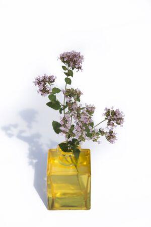 origanum: oregano in yellow vase