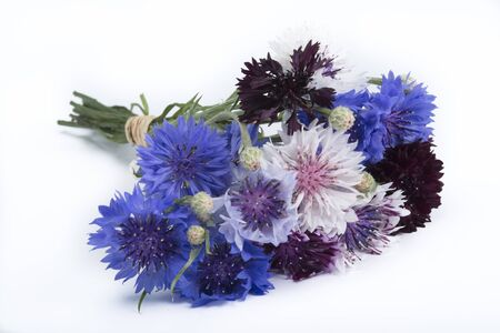 centaurea: Centaurea bouquet isolated on white background