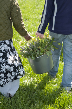 carying: people carry yellow tulips in buckets in grassland
