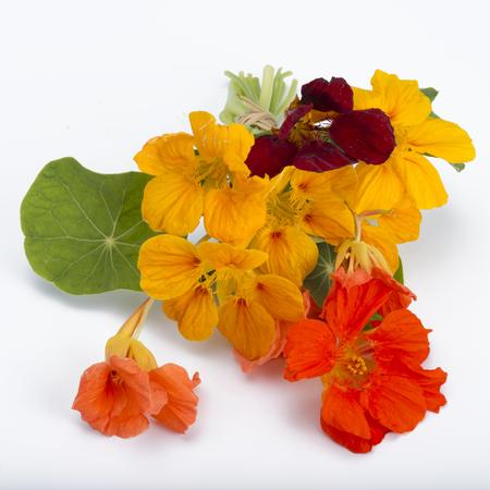 bouquet of garden nasturtium isolated on white backgound 写真素材