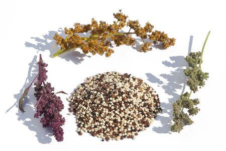 quinoa mix and plant on white background Stock Photo