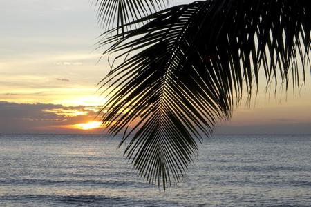 kood: Palm tree leaf in sunset, Kho Kood Thailand