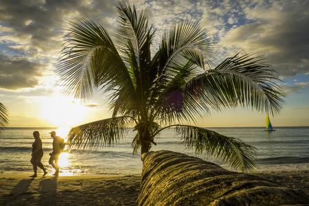 kood: Palm tree on the beach in sunset, Kho Kood Thailand
