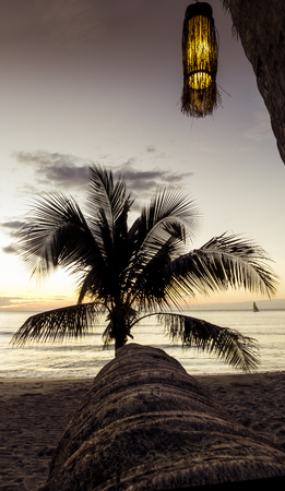 kood: Palm tree with lamp in sunset, Kho Kood Thailand