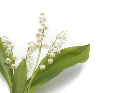 muguet: Lily of the Valley (Convallaria Majalis) isolated on a white background Stock Photo