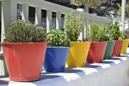 fresh herbs in colored pots and buckets Stockfoto