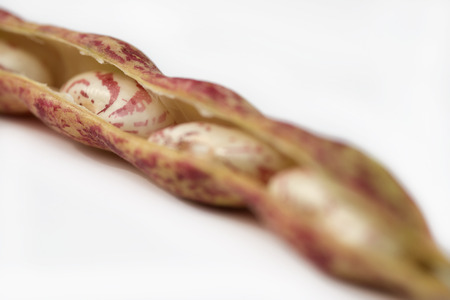 roman beans: Raw Organic cranberry bean on white background