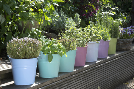 mix of herbs in colored buckets in garden