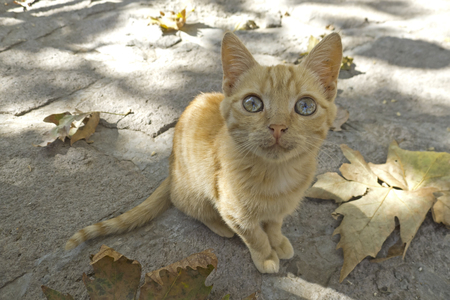 cat island: cat from Greece, at the beautiful Greek Island, Lesvos