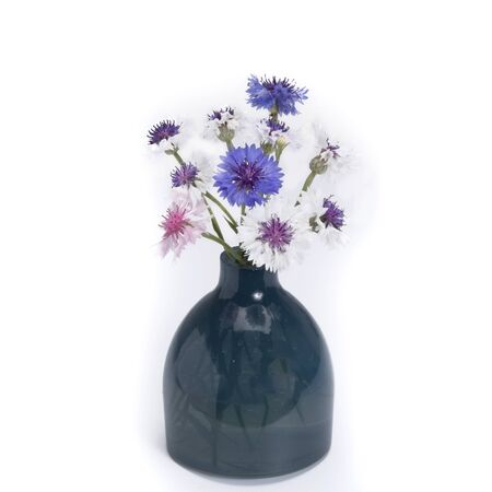 centaurea: Centaurea in vintage vase isolated on white background Stock Photo