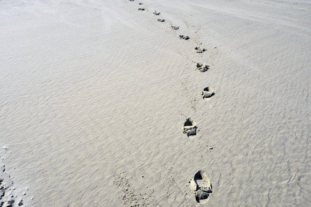 foots: foots steps at the beach Terschelling, The Netherlands