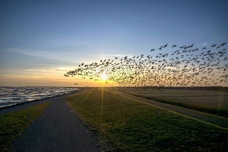 Flying goose in sunset Terschelling The Netherlands Stock Photo - 59742692