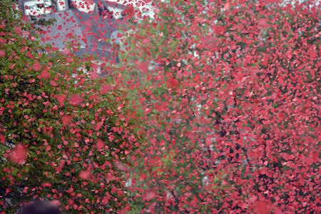 prinsengracht: Amsterdam, Netherlands - August 1, 2015: confetti at  the annual event for the protection of human rights and civil equality - Gay Pride Parade on the Prinsengracht, Amsterdam