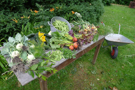 fresh vegetables from the garden, The Netherlands Stock Photo