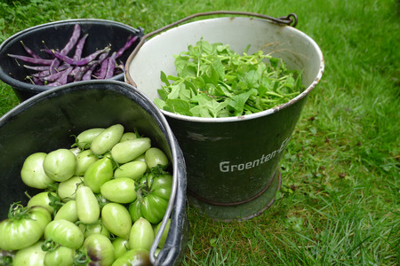 ration: fresh pecked tomato beans and spinach in buckets Stock Photo