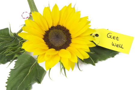 sunflower with tag 'Get Well' isolated on white background