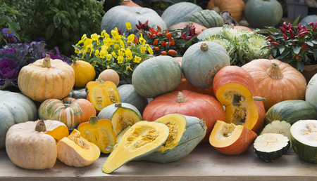 autmn: pumpkins and plants on gardentable in autmn Stock Photo