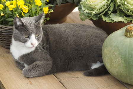 autumn cat: cat on gardentable with pumpkin and plants in autumn