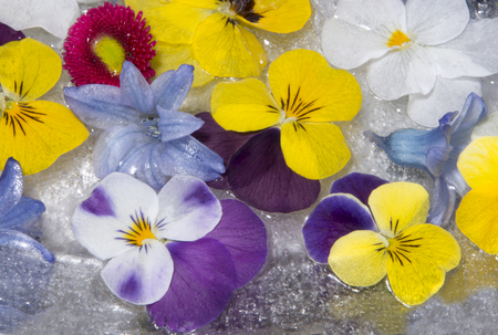 beautiful frozen spring flowers in spring setting