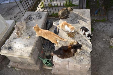 panteleimon: cats on graveyard at Saint Panteleimon Lesvos Greece Stock Photo