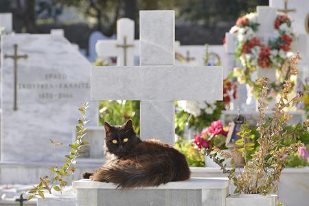 panteleimon: cat on graveyard at Saint Panteleimon Lesvos Greece