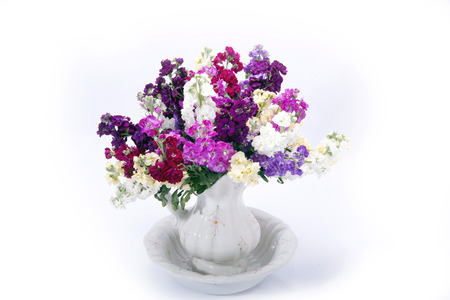 beautiful bouquet of mixed Matthiolas in vase isolated on white background Stock Photo