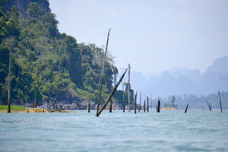 sky brunch: dead tree sticking out of the water from Lake National Parc Khao lak Stock Photo