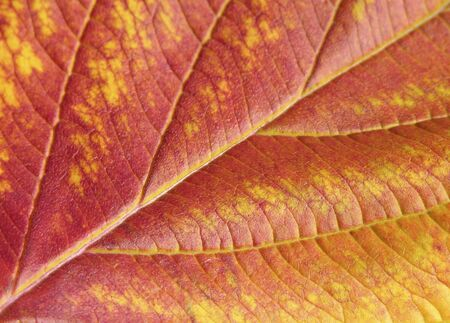 indian summer: Yellow and red autumn leaves in Indian Summer Stock Photo