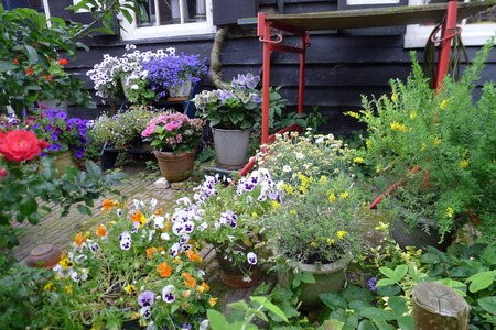 summergarden with pansies rose and flowers in pots Stock Photo