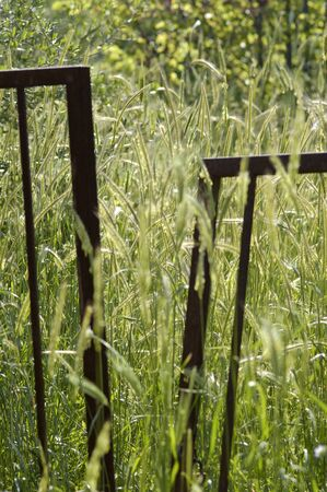 Iron fence in a green and yellow grainfield