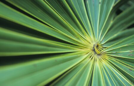 green leaf fan in a tropical forest