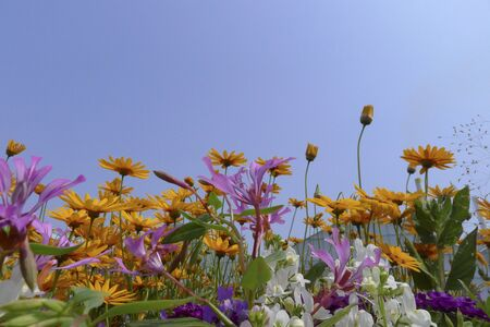 wild flower fields with annual plants from seeds. Stock Photo