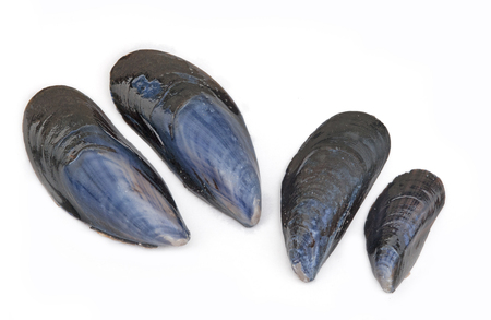blue mussel shell isolated on a white background Фото со стока