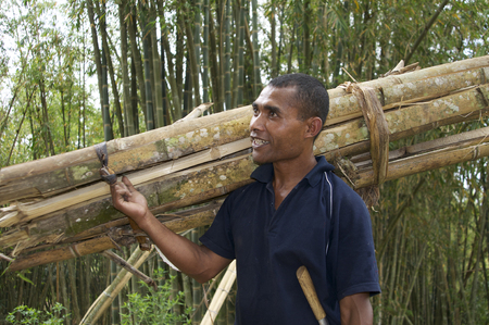 loei: Flores, Indonesia, 02-12-2012. Man carying bamboo in the jungle
