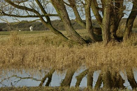 goeree: The kwade hoek is a dynamic tidal within Goeree dunes, Zeeland the Netherlands