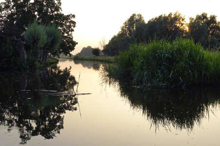 Reeds reflecting in the water, de Rijp the Netherlands
