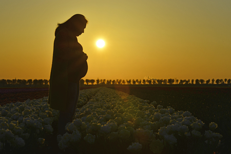 The stunning silhouette of a pregnant woman as she stands in a field of flowers and looks down at her unborn child.