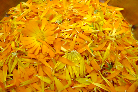 Home made Calendula creme from the flower garden