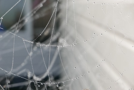 water drops on spiderweb, The Netherlands Stok Fotoğraf